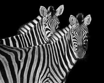Diese Zebras schauen Sie an von Patrick van Bakkum