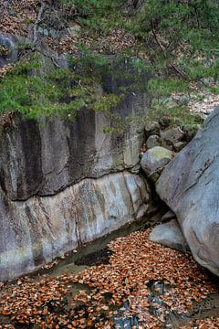 Wasser, Felsen und Bäume in Buchan von Mickéle Godderis