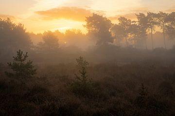 Wunderschöner Sonnenaufgang auf der Kampina in Noord-Brabant. von Jos Pannekoek