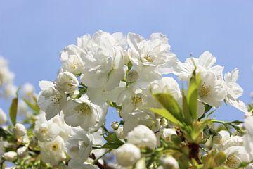 Flores de cerezo van Dagmar Marina