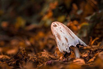 Paddestoel in herfststemming van Martzen Fotografie
