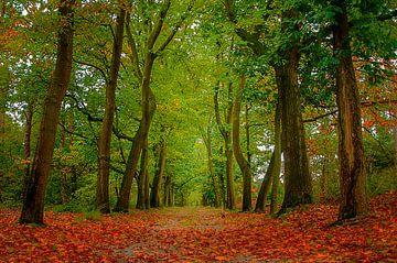 Herfst in nederland van Sylvain  Poel