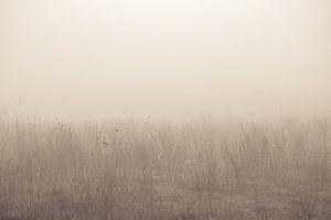 Stilleven in de mist
