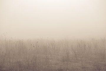 Stilleven in de mist van Ellen Metz