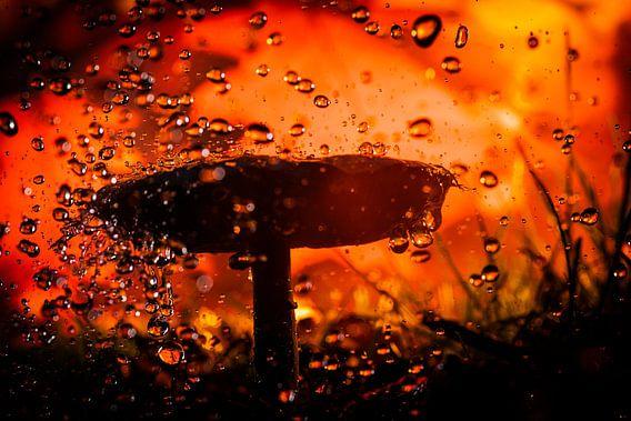 Paddestoel in de regen
