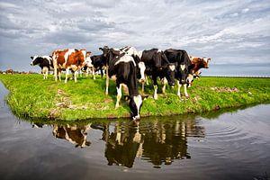Cowscape #1 van Mario Bentvelsen