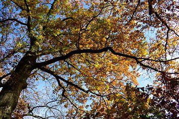 """herfst serie bomen van Janny Schilderink......Atelier """"de Tuute """""""