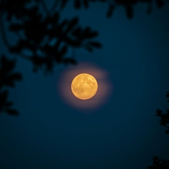 Volle maan (vierkant) van Colin van der Bel