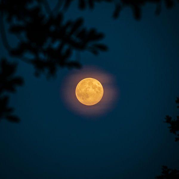 Volle maan (vierkant)