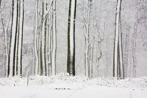 Bomen in de sneeuw als streepjescode van