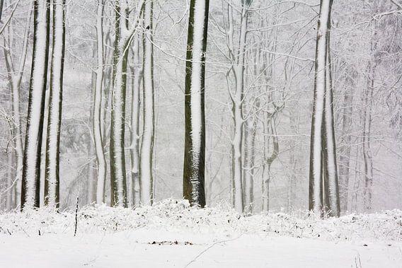 Bomen in de sneeuw als streepjescode van Jim van Iterson