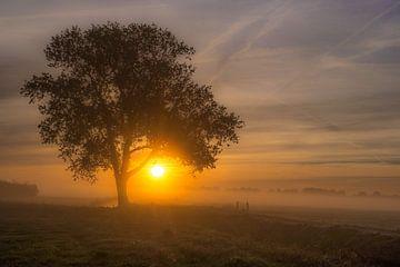 Zonsopkomst bij boom von Moetwil en van Dijk - Fotografie