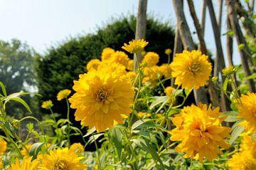 Bloemen van Twan van G.
