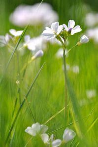 dansende bloemen in de lente