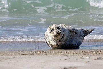 Zeehond op het strand van Düne von Antwan Janssen