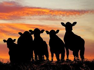 Sunset cows van Annemieke van der Wiel