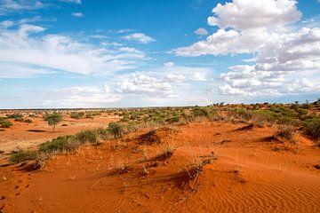 Düne in der Kalahari von Britta Kärcher