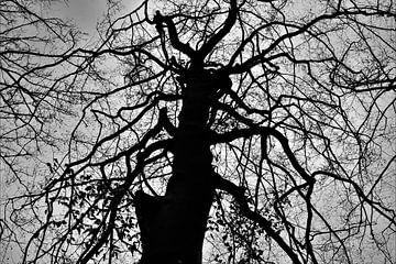 Böser Baum von On The Road Foto