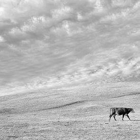 Eenzame koe von Bastiaan Schuit