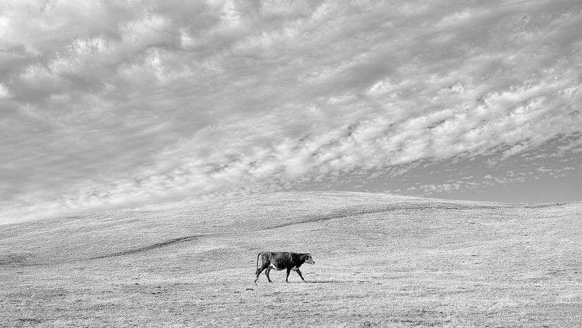 Eenzame koe van Bastiaan Schuit