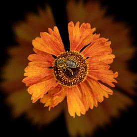 Biene auf einer orangefarbenen Blume von Ribbi The Artist