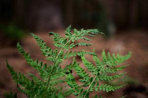 Varen in het bos van Jaleesa Koelen