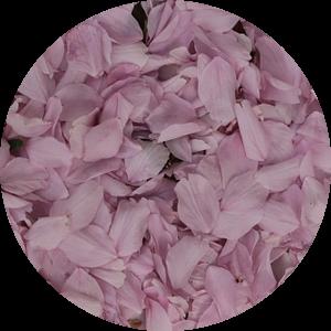 Roze bloemblaadjes van de Prunus japonica van Cora Unk
