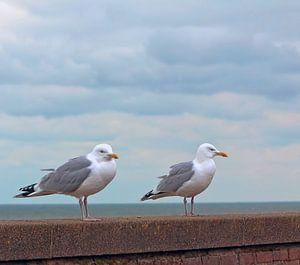 Möwen mi Blick auf die Nordsee