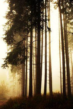 Wald mit Nadelbäumen von Jana Behr