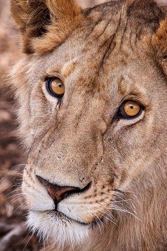 leeuwin van Paul Jespers