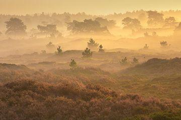 Landschaft in Drenthe von Andy Luberti