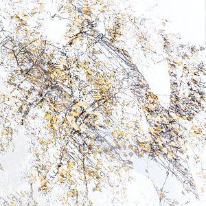 Herfst abstract van Ingrid Van Damme fotografie