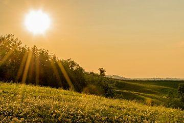Romantische zonsondergang boven het veld