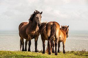 Paarden bij White Cliffs Dover
