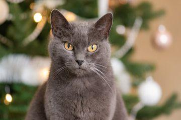 Weihnachtskatze von Tania Perneel