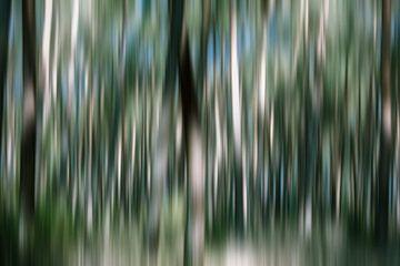 In het midden van het bos van URS.INHO