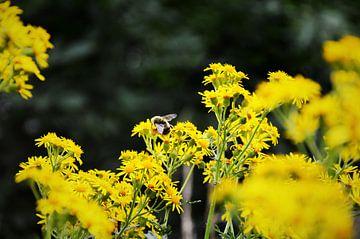 Honingbij aan het werk von Evy Coppens