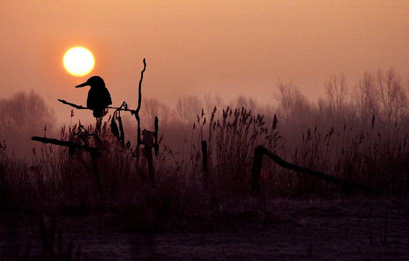 IJsvogel van Ronald Jansen