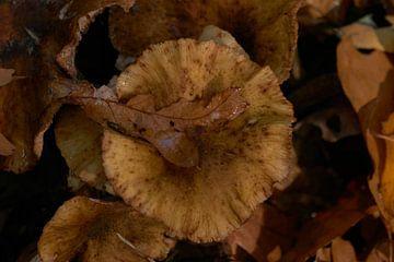 Herfst blad van Kai Grijff