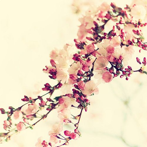 Kirschblüten Vintage