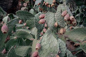 Cactus van Studio Daniell