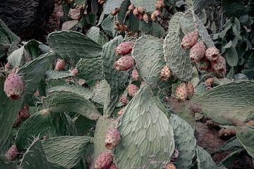 Kaktus von Studio Daniell