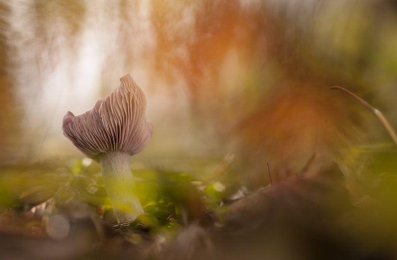 Zwam met herfstgevoel van Frans Batenburg