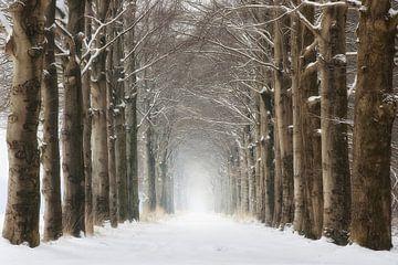 Bomen in de winter sneeuw van Rob Visser