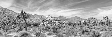 Joshua Tree National Park - Panorama Monochroom van Melanie Viola