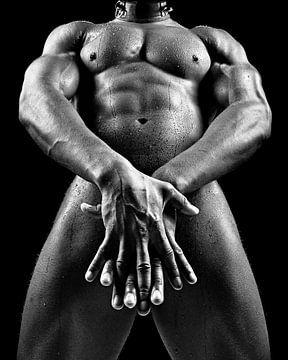 Nackter Mann mit schön bemuskeltem Körper. #D9174 von william langeveld