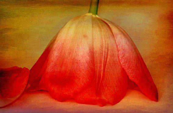 Tulpe kopfüber van Rosi Lorz