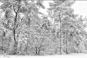 Sparren bos van Remco Stunnenberg
