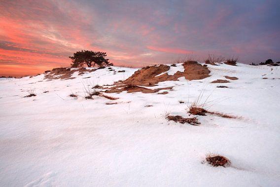 Sneeuw en Zand IV van Mark Leeman