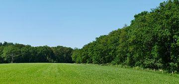 Weilanden met eiken bosranden. van Wim vd Neut